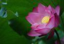 Các Nguyên Tắc Cốt Lõi Của Các Khoá Thiền Vipassana – VRIDhamma.org