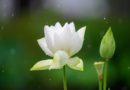 FAQs on Vipassana Meditation –Hỏi đáp về thiền Vipassana