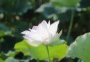 FAQ: Đâu là sự khác nhau giữa Vipassana và sự tập trung? Tâm xả liên quan đến Định?