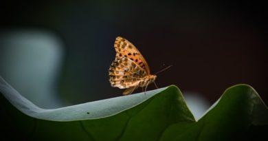 Lịch Sử Lan Toả Thiền Vipassana Trong Tù